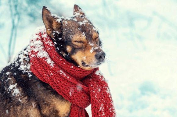 proteggere gli animali dal freddo